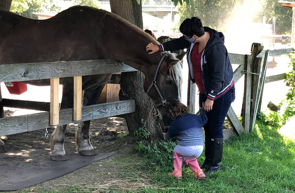Sponsor a horse in need